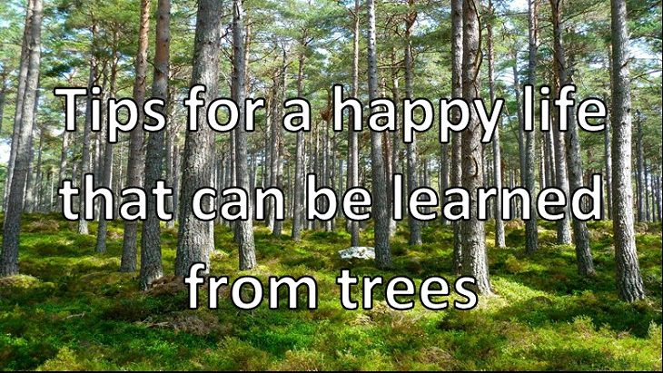 Tips for a happy life that can be learned from trees