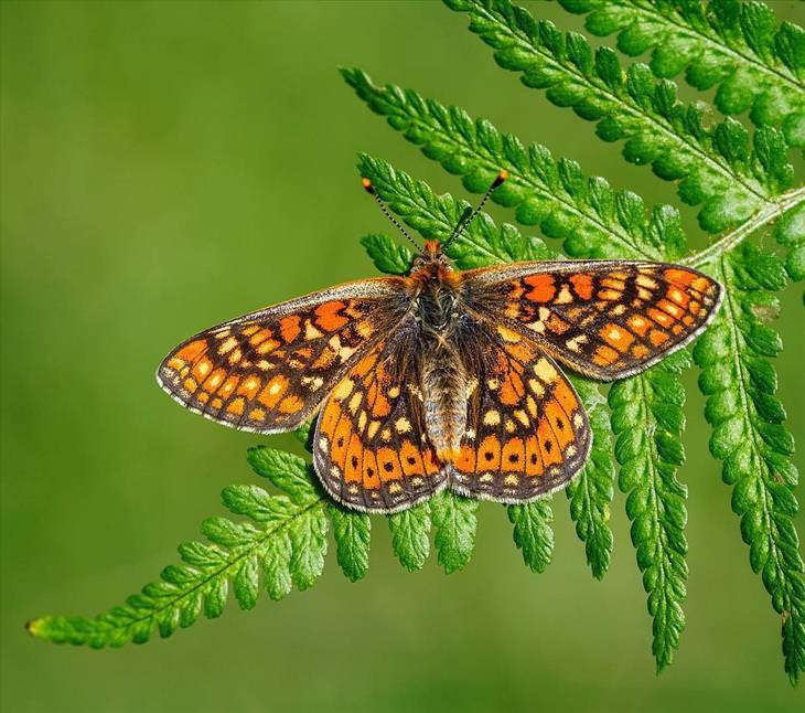 butterflies-imagebox