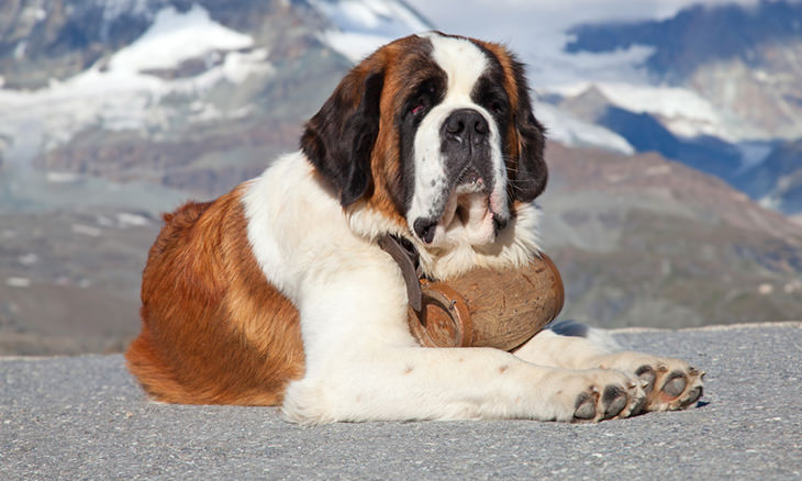 most-loyal-dog-breeds
