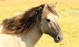 quiz: horse