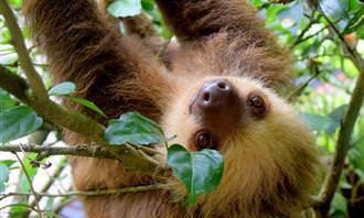 quiz: sloth