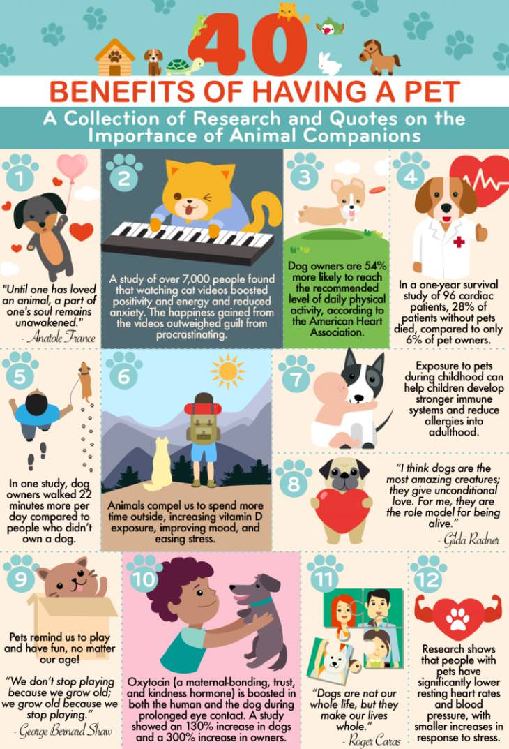 40 reasons to have a pet infographic