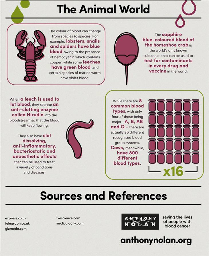 blood-infographic
