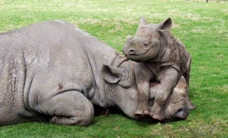 Funny animals annoyed by their kids