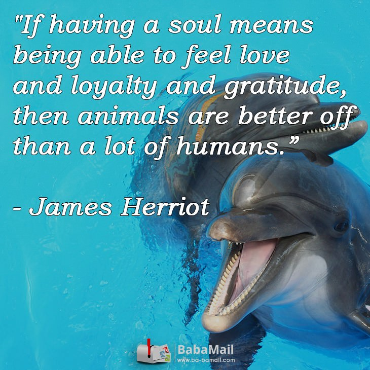 animal-quotes