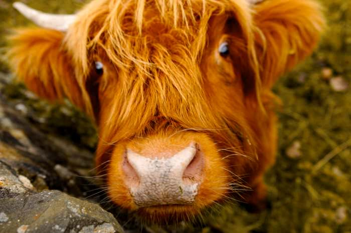 redheaded animals