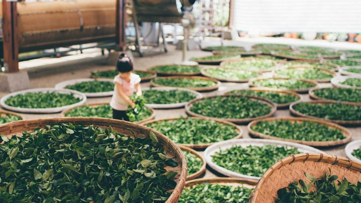 tea leaves are being dried out in baskets