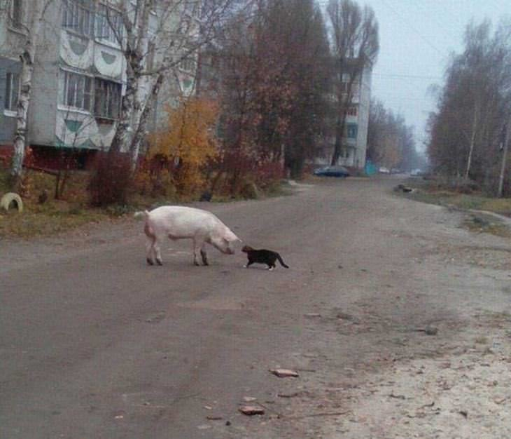 only-in-russia