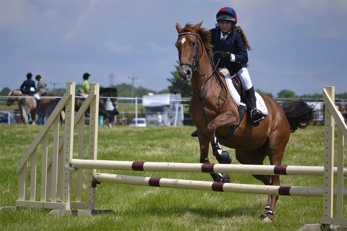 A horse jumping over an obstacle