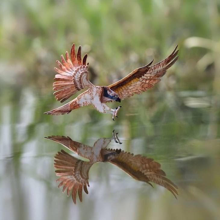 Vaishali and Nayan bird art