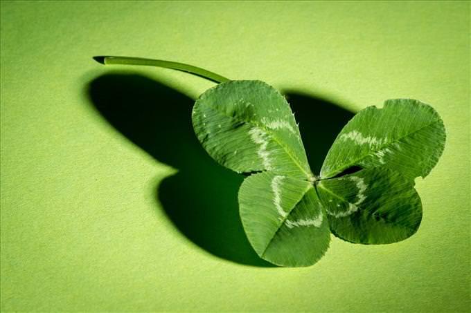 un trébol de cuatro hojas