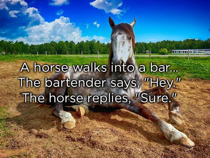 "A horse walks into a bar... The bartender says, ""Hey."" The horse replies, ""Sure."""