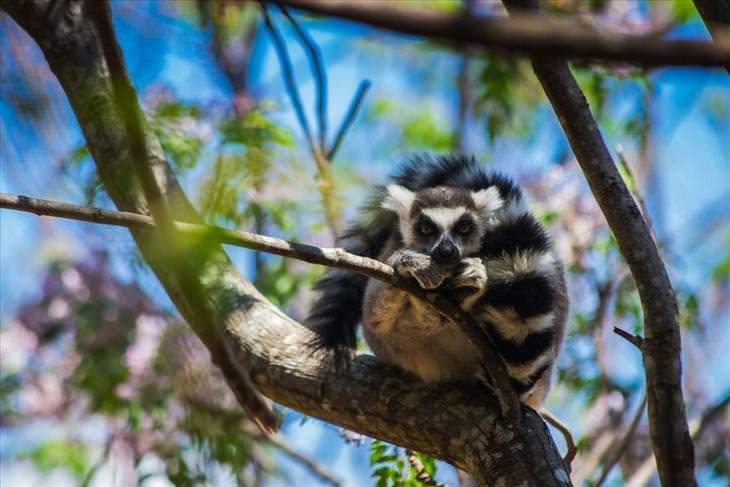 photographs from Madagascar