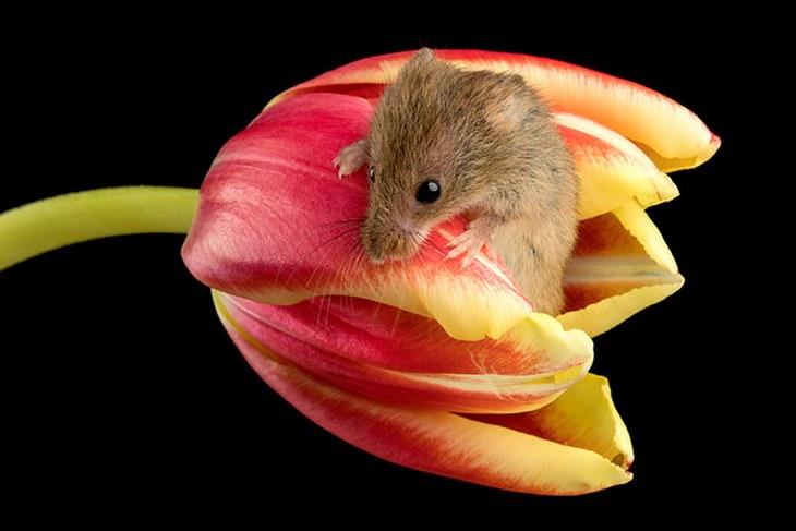 mice in flowers