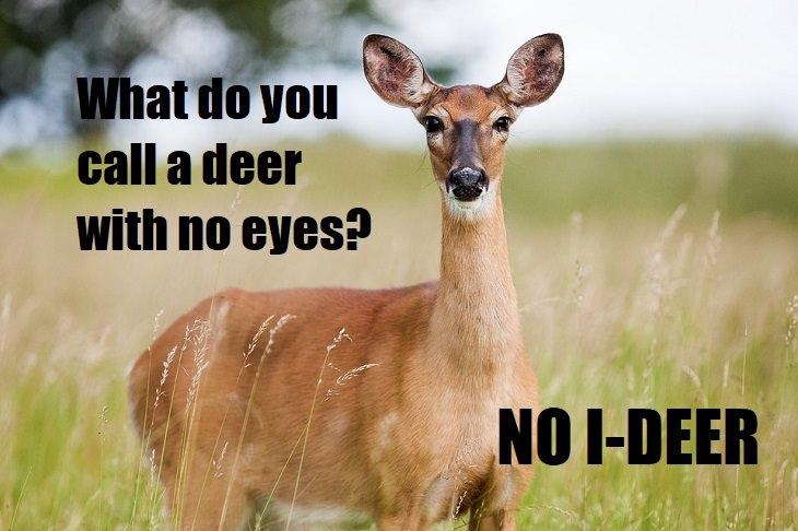 What do you call a deer with no eyes? No I-deer. lame joke