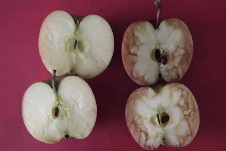 the parable of the apple