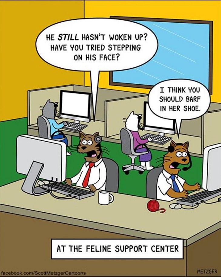 Funny Cat Comics