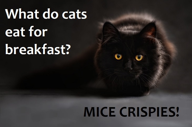 What do cats eat for breakfast? Mice Crispies. family jokes