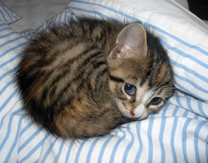 75 Insanely Adorable Tiny Kittens