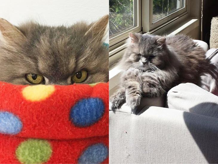 rescued-cats
