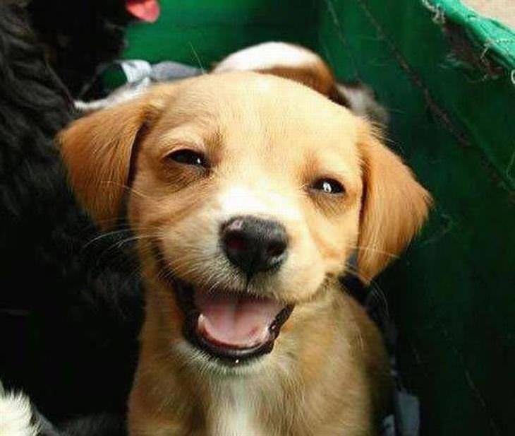 75 Pictures Of Cute Dogs And Puppies Smiling Cute Overload