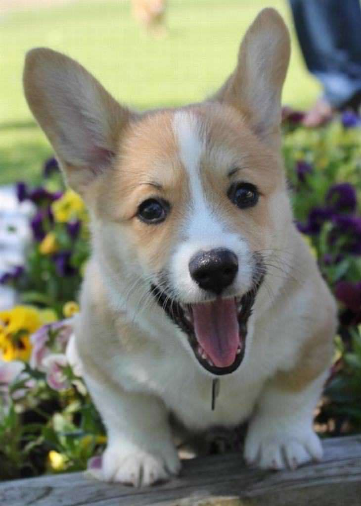 Pictures Of Cute Dogs And Puppies Smiling
