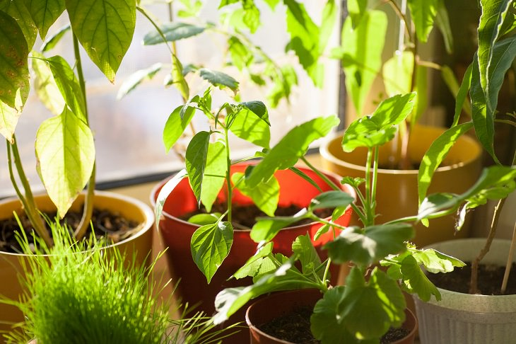 Increasing Humidity for Plants