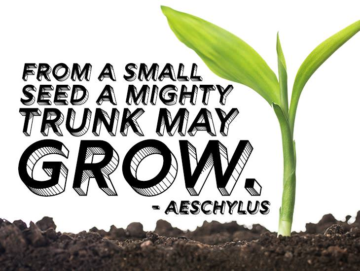 From A Small Seed A Mighty Trunk May Grow