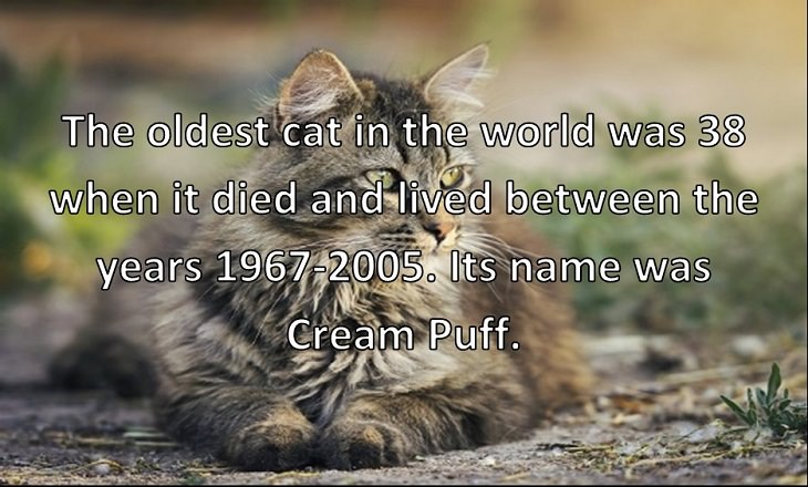 The oldest cat in the world was 38 when it died and lived between the years 1967-2005. Its name was Cream Puff.