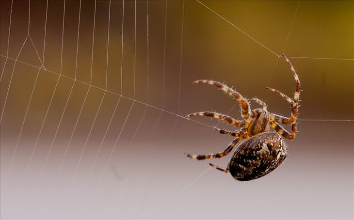 Don't Get Rid of Spiders