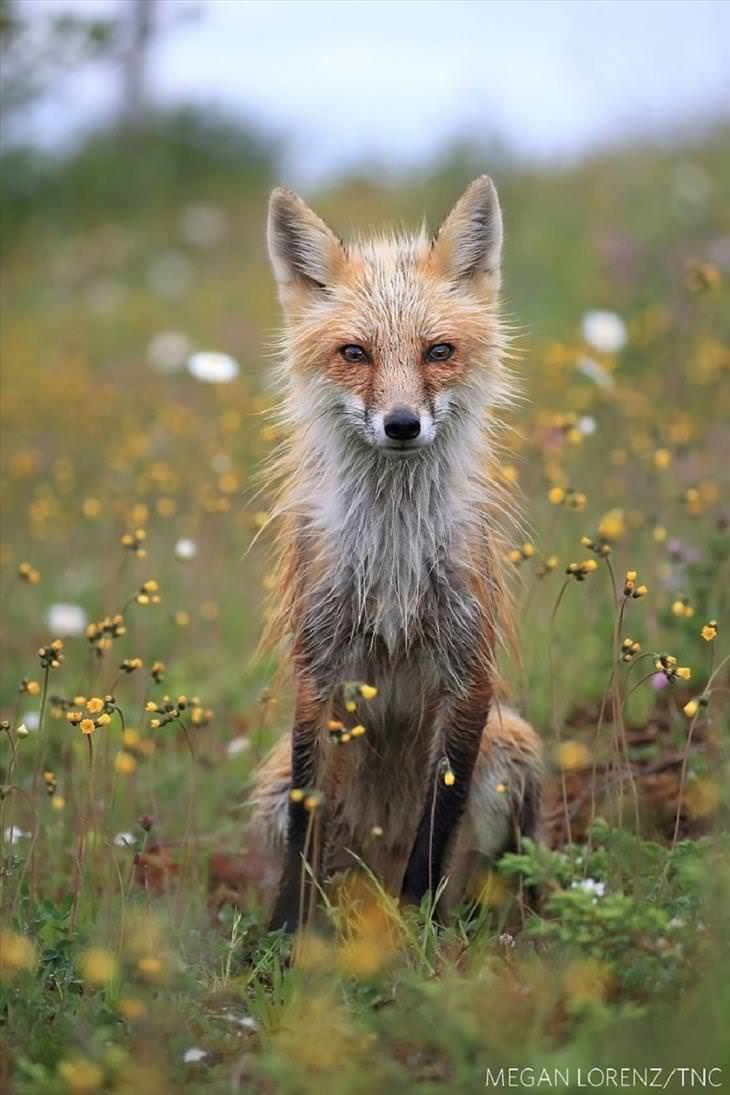 Nature Conservancy Photography Competition