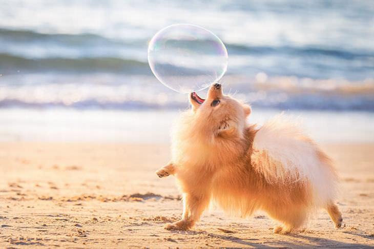 dog photography awards