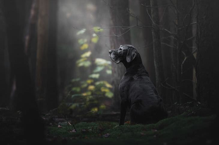 dog photography awards