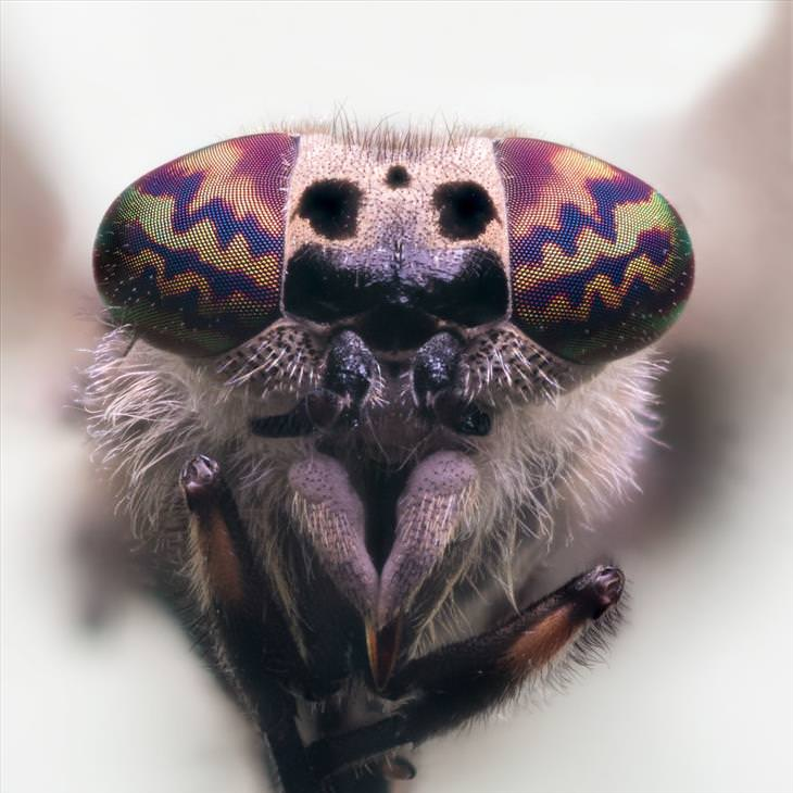 close up of insects