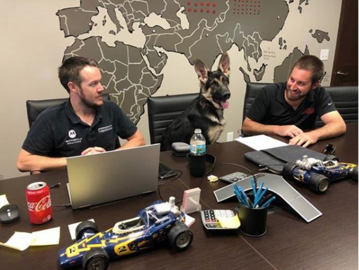 dogs-best-co-workers