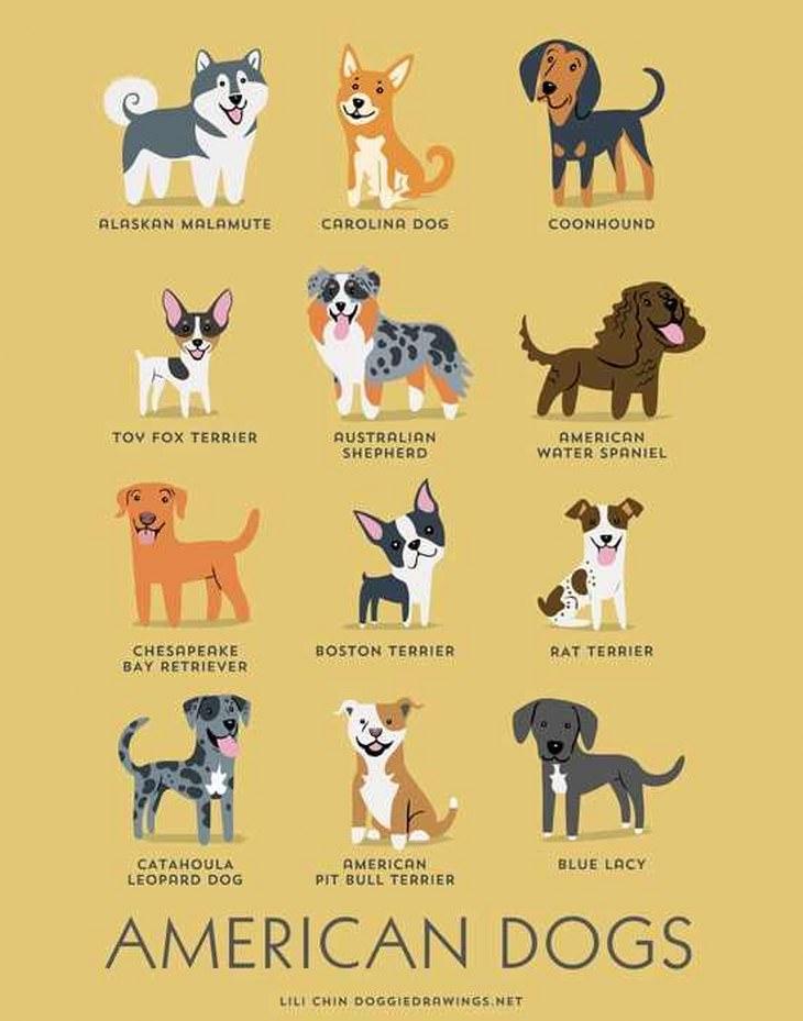 Dog Infographic