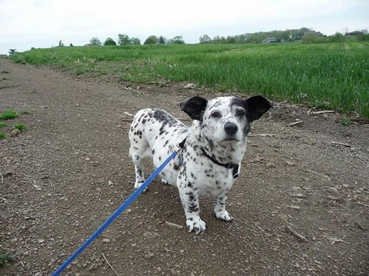 cross breeds of dogs