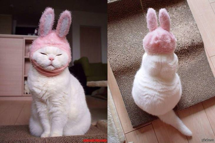 a cat wearing a bunny hat