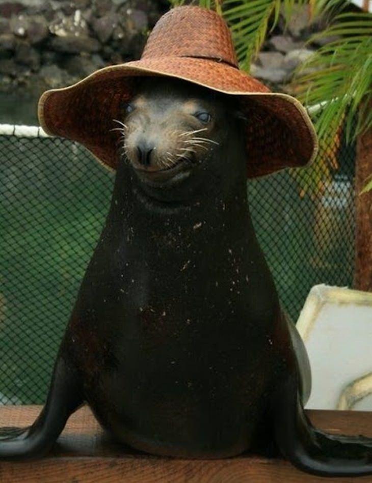 a sea lion wearing a straw hat
