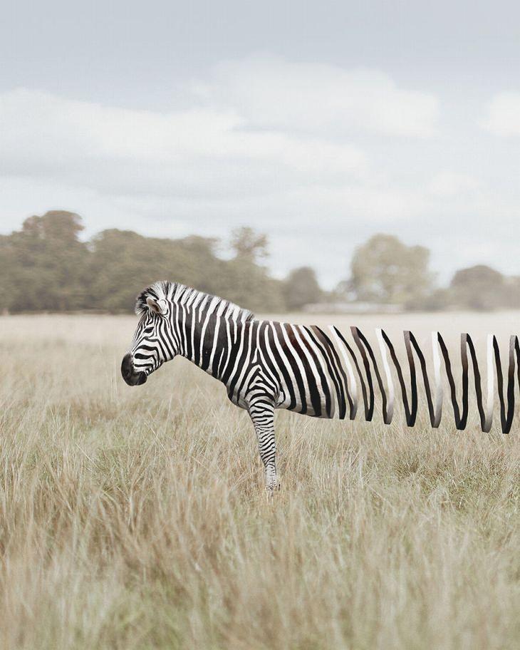 Zulkarnain Ismail zebra
