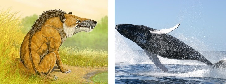 whales vs Andrewsarchus