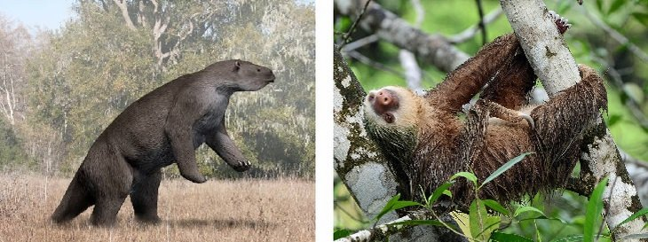 sloths vs Megatherium