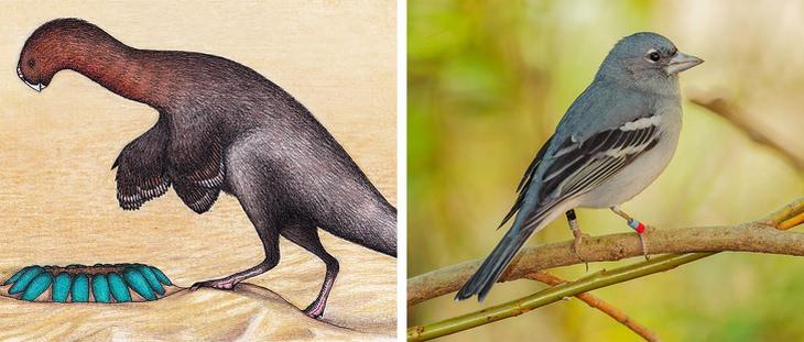 birds vs Heyuannia