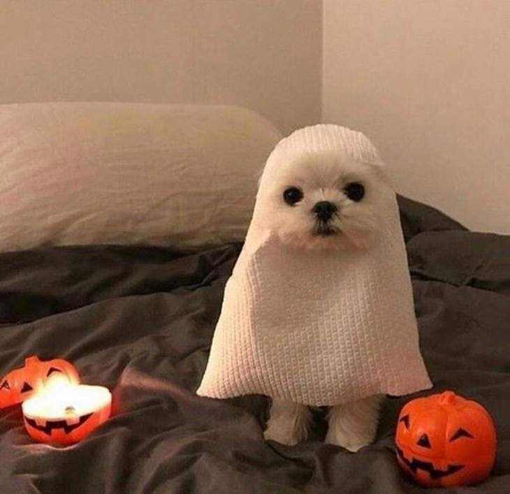 Photos of Pets Wearing the Cute Costumes dog ghost