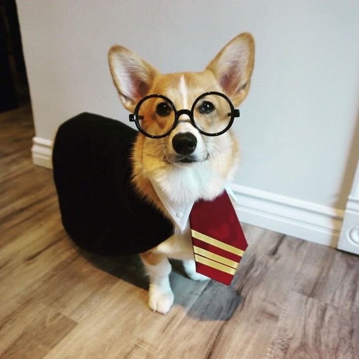Photos of Pets Wearing the Cute Costumes Harry Potter corgi