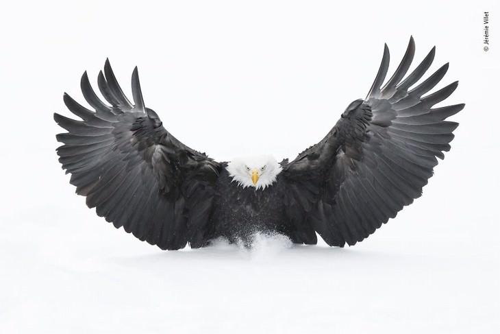 Wildlife Photographer of the Year Awards 2019 Jérémie Villet