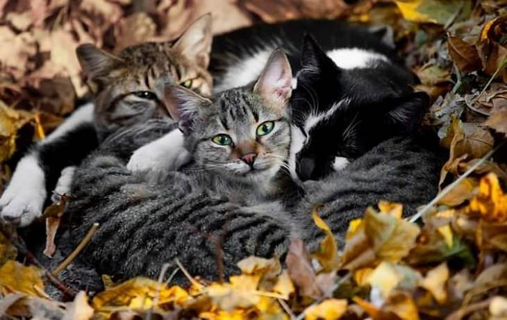 animals showing affection cats in a pile on leaves
