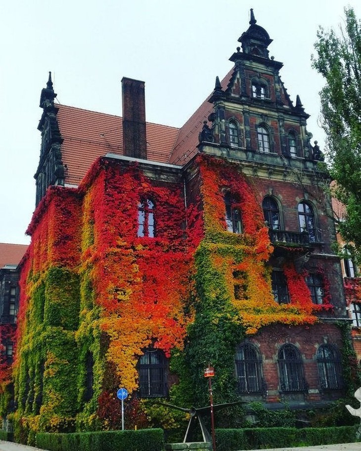 Fall Photos From Across the Globe Wroclaw, Poland