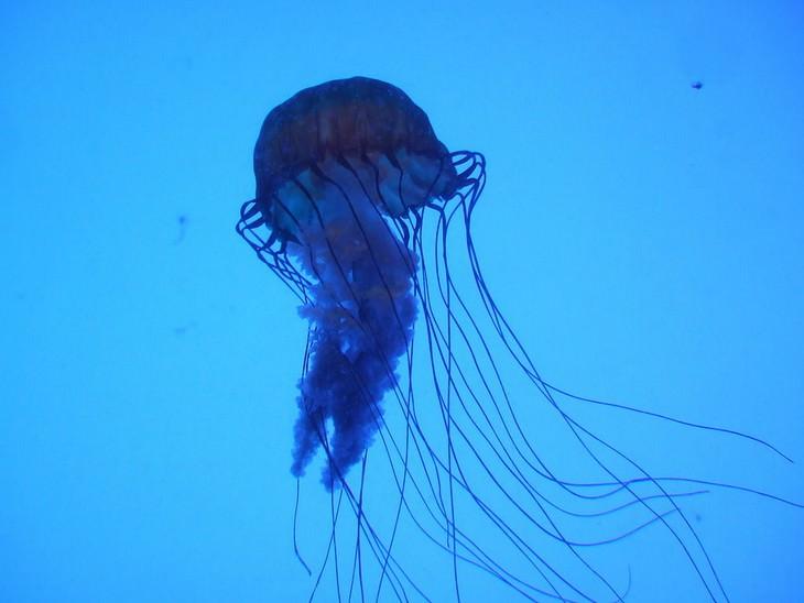 deadliest animals on Earth Box Jellyfish