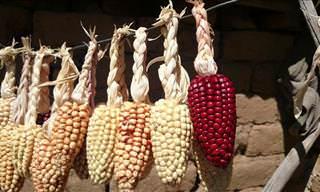 Healthy Vegetables: Corn